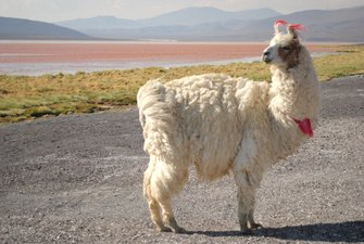 Andean Bolivia: the main tourist destinations