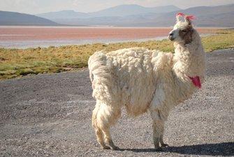 Andean Bolivia: the main tourist destinations
